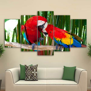 Beautiful Parrots