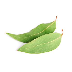 Eucalyptus Witch Hazel Ingredient for Oily Skin Face Mask