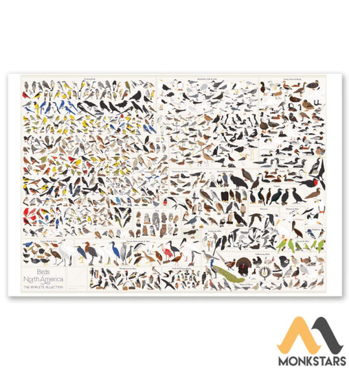 Birds Of North America Poster 24X36 Horizontal / White Posters