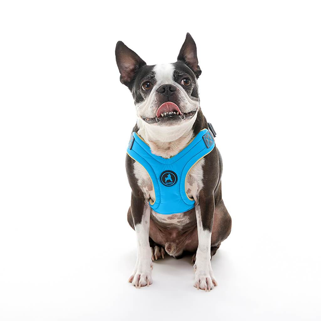 Gooby Escape Free memory foam Harness Blue