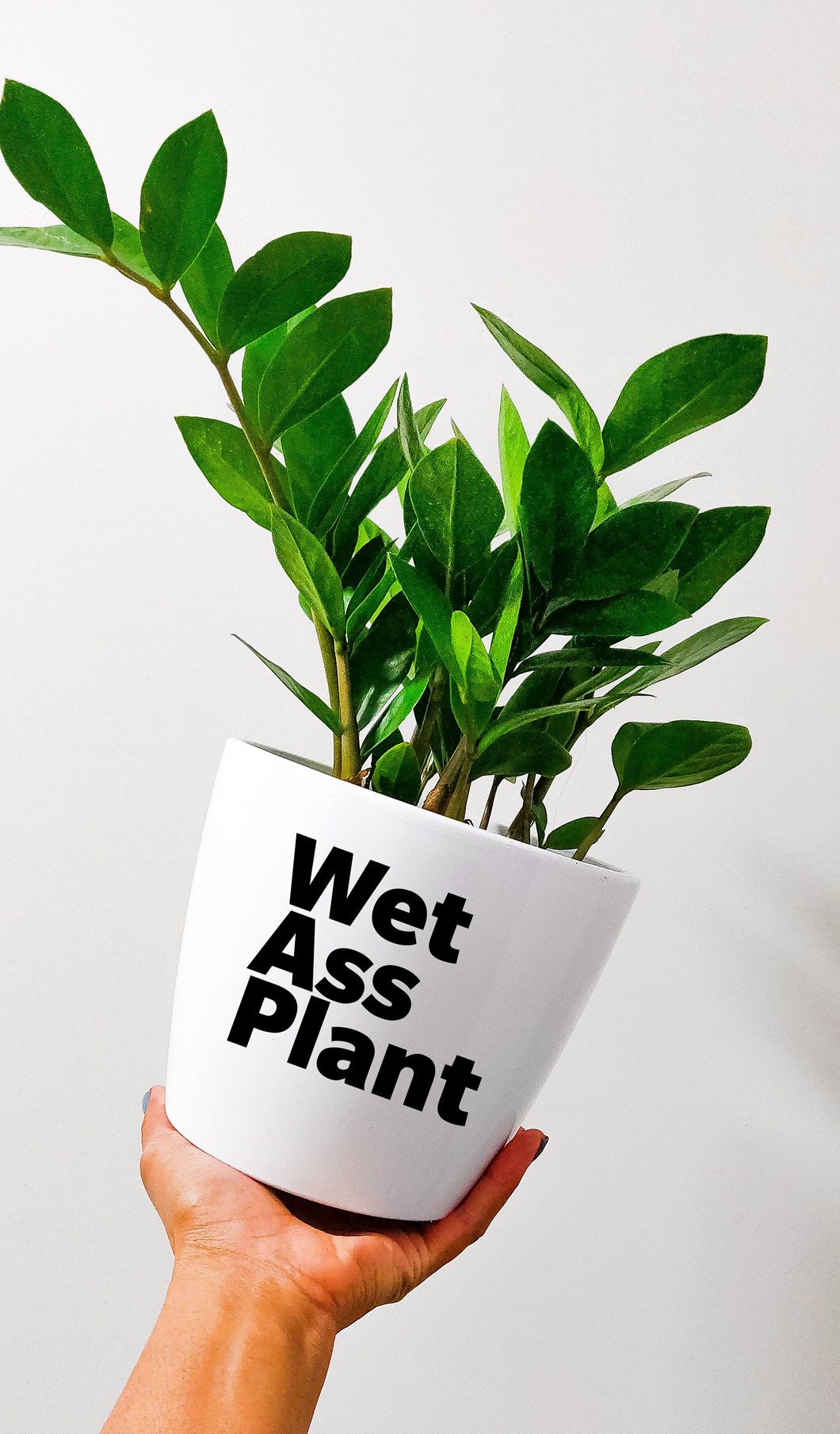 Pot - Wet Ass Plant