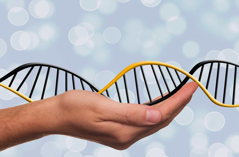 How effective are DNA repair enzymes?