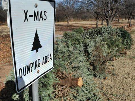 living christmas trees stop the millions of trees killed and sent to landfill each year