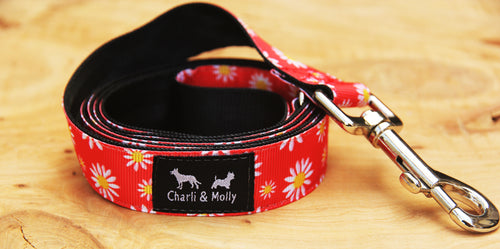 Red Daisy Lead