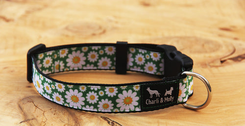 Daisy Meadow Dog Collar
