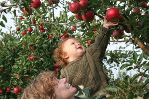 Apple-Picking is quite a memorable time for children