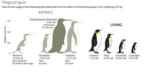A scaled illustrations of other penguins and the colossus!