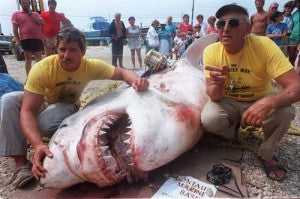 The Great White Shark of over 3000 pounds, caught in the 80's.