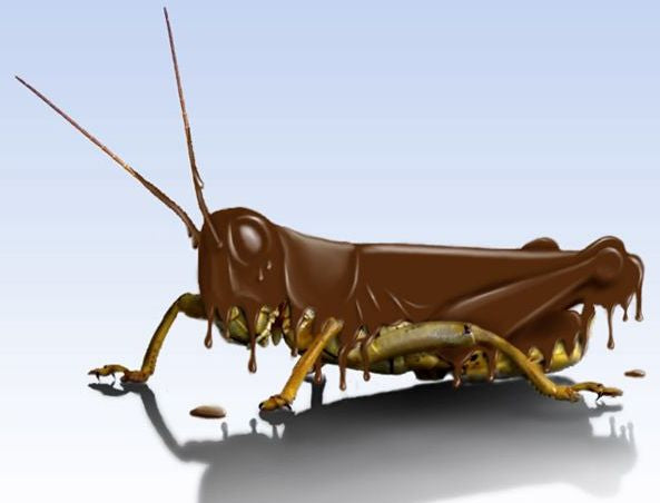 Grasshoppers actually don't taste bad at all and I bet that if they're covered in chocolate, you'd LOVE them!