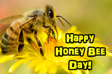 Happy Honey Bee Day, Y'all!