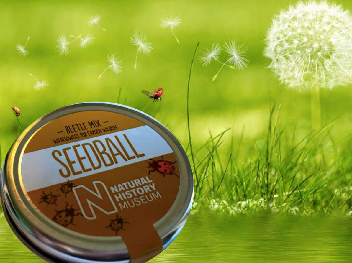 Beetle Mix seedballs