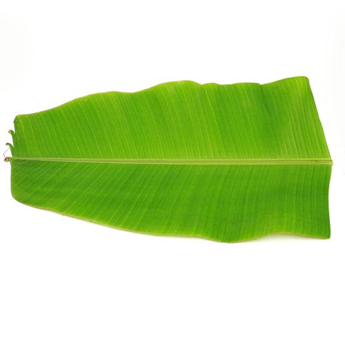 Banana Leaf, 2 pcs