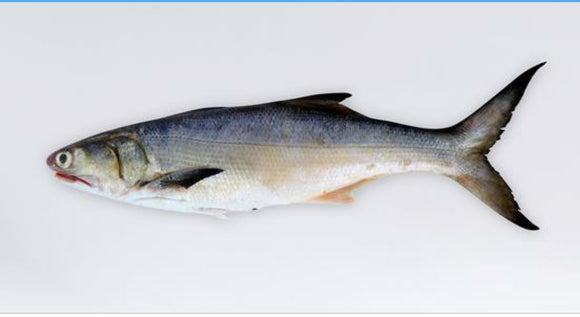 Indian Salmon Small(.7-1kg)