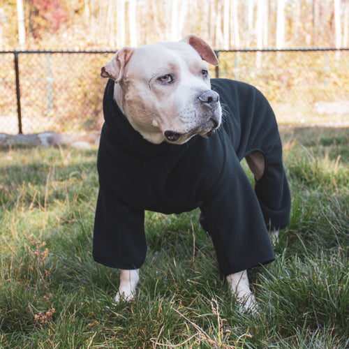 pittbull wearing black fleece dog pajamas