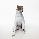 italian greyhound sitting in kuvfur dog pajamas tracksuit jogger grey