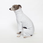 italian greyhound sitting in heathered grey tracksuit dog pajamas