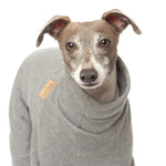 italian greyhound in grey tracksuit