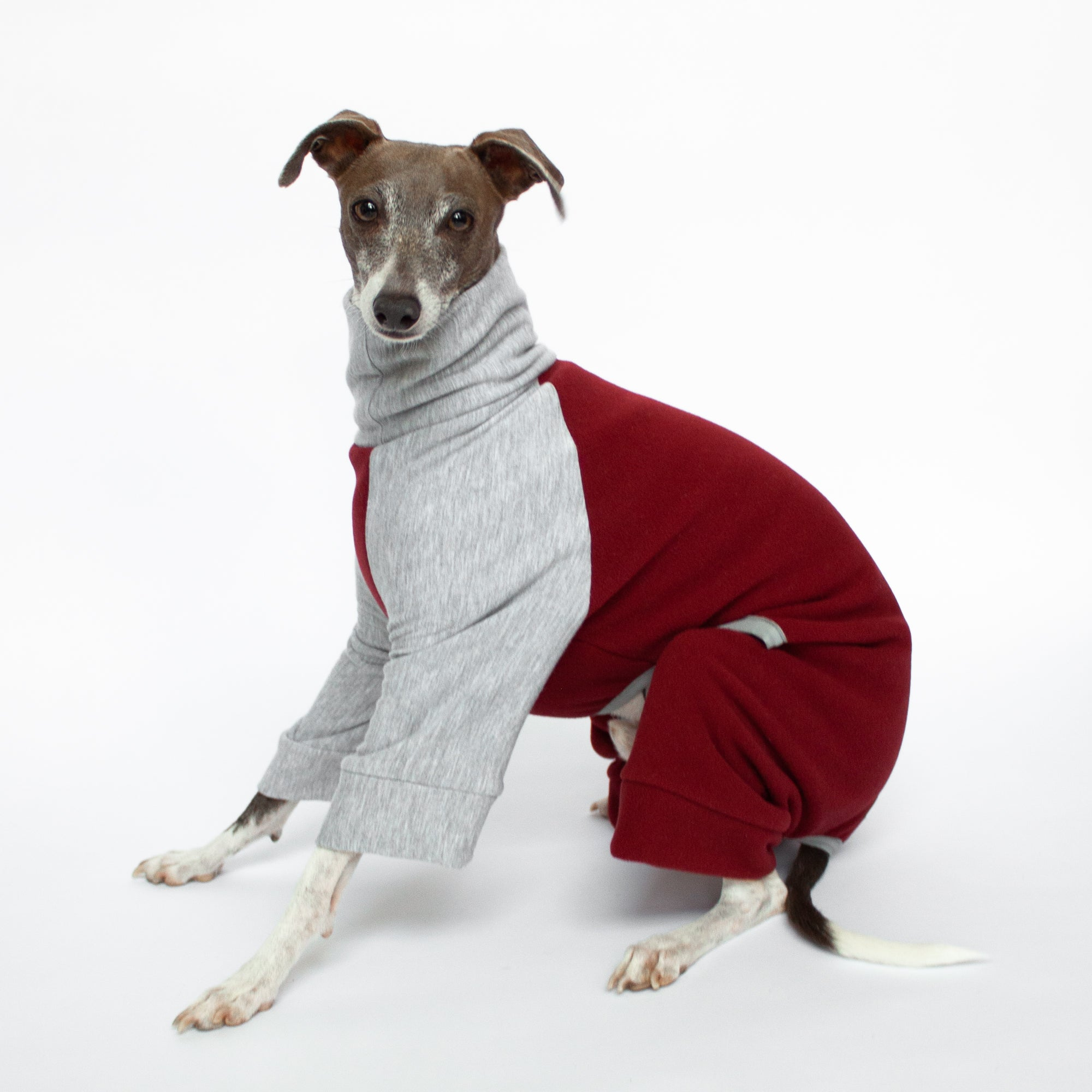 italian greyhound sitting in red and grey fleece dog pajamas