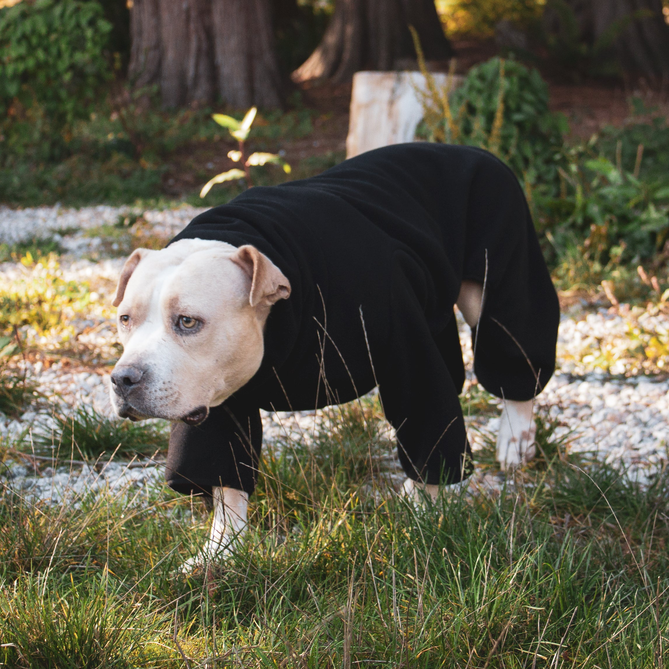 pitbull in kuvfur black fleece dog onesie