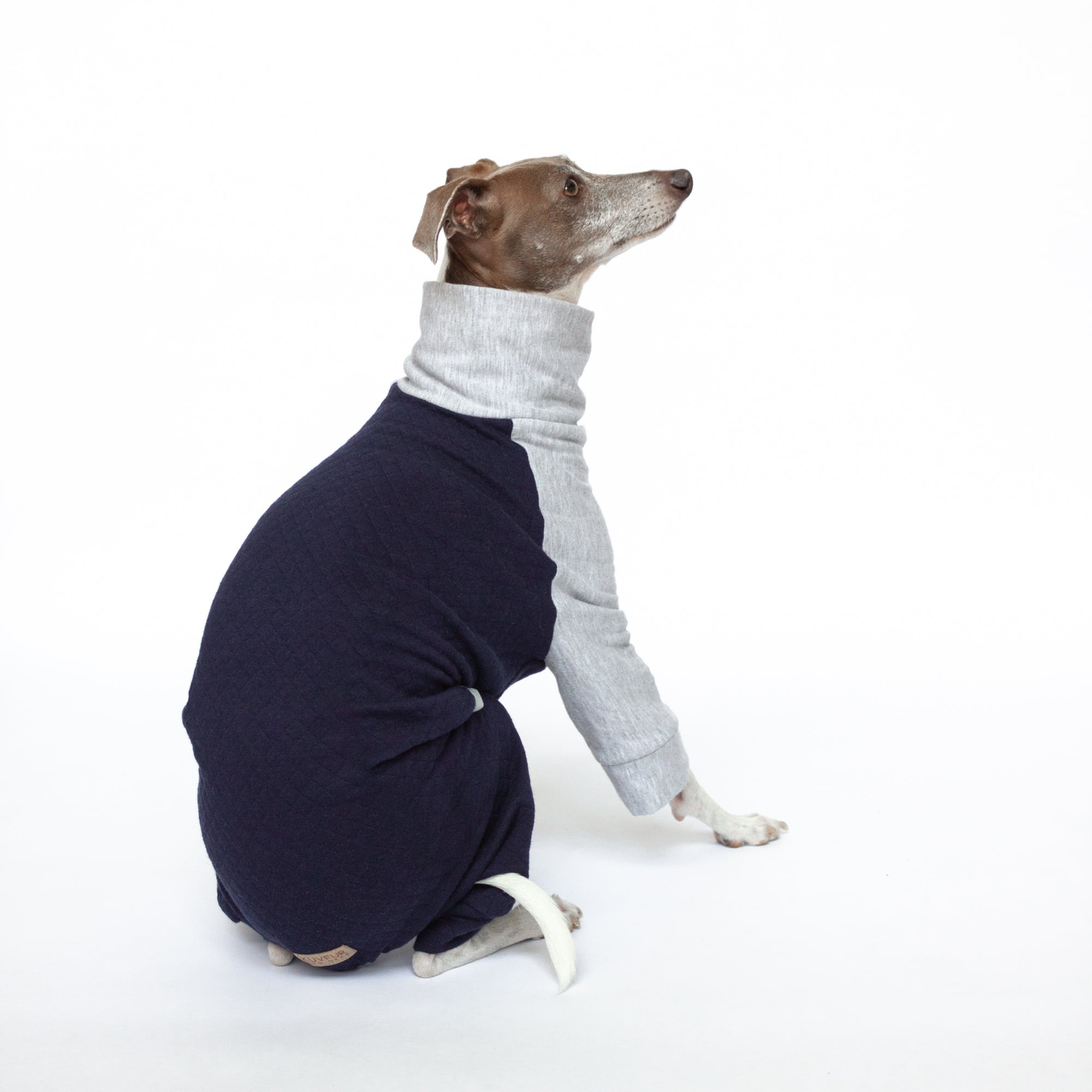 italian greyhound sitting in quilted dog pajamas navy blue and grey