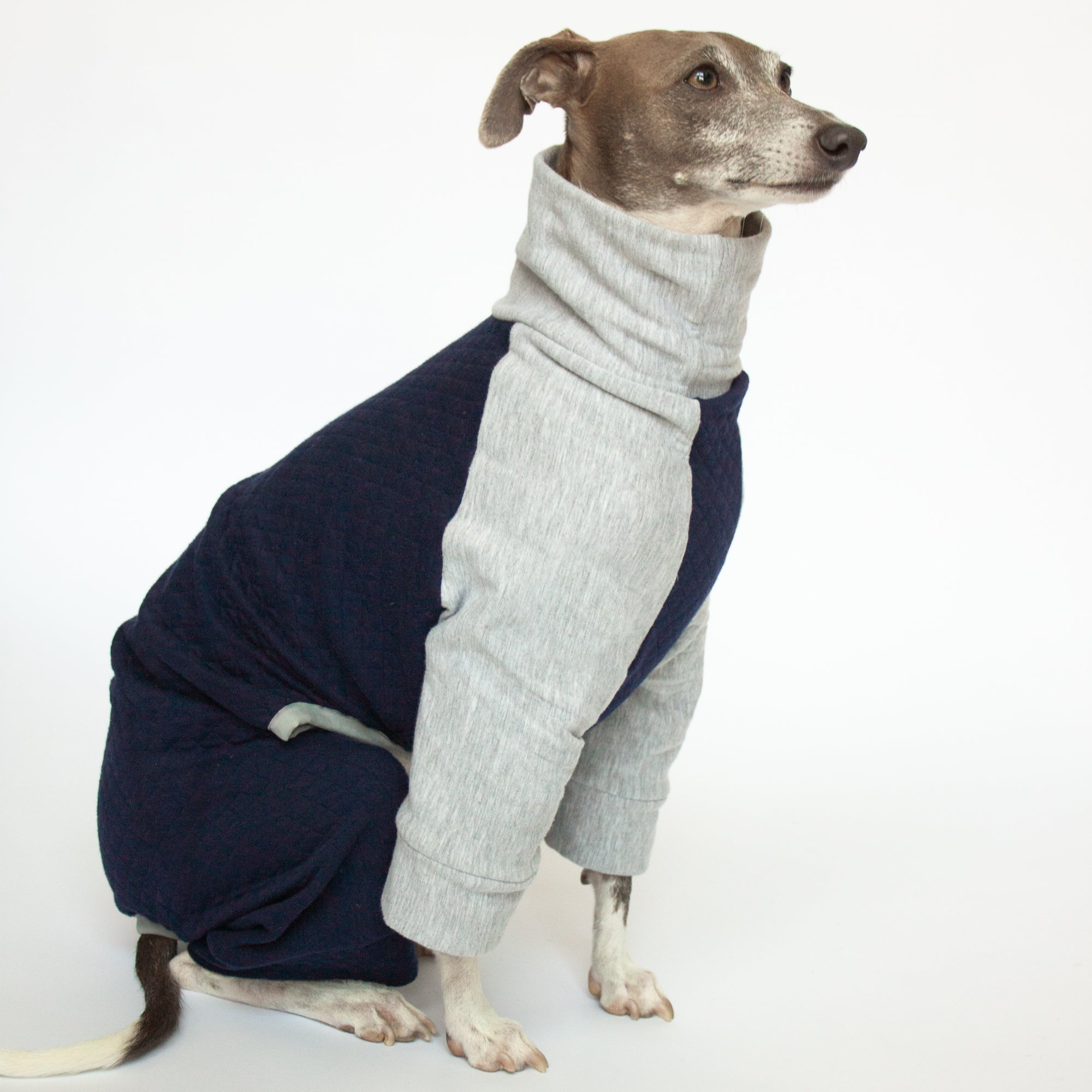 greyhound sitting in quilted dog pajamas navy blue and grey