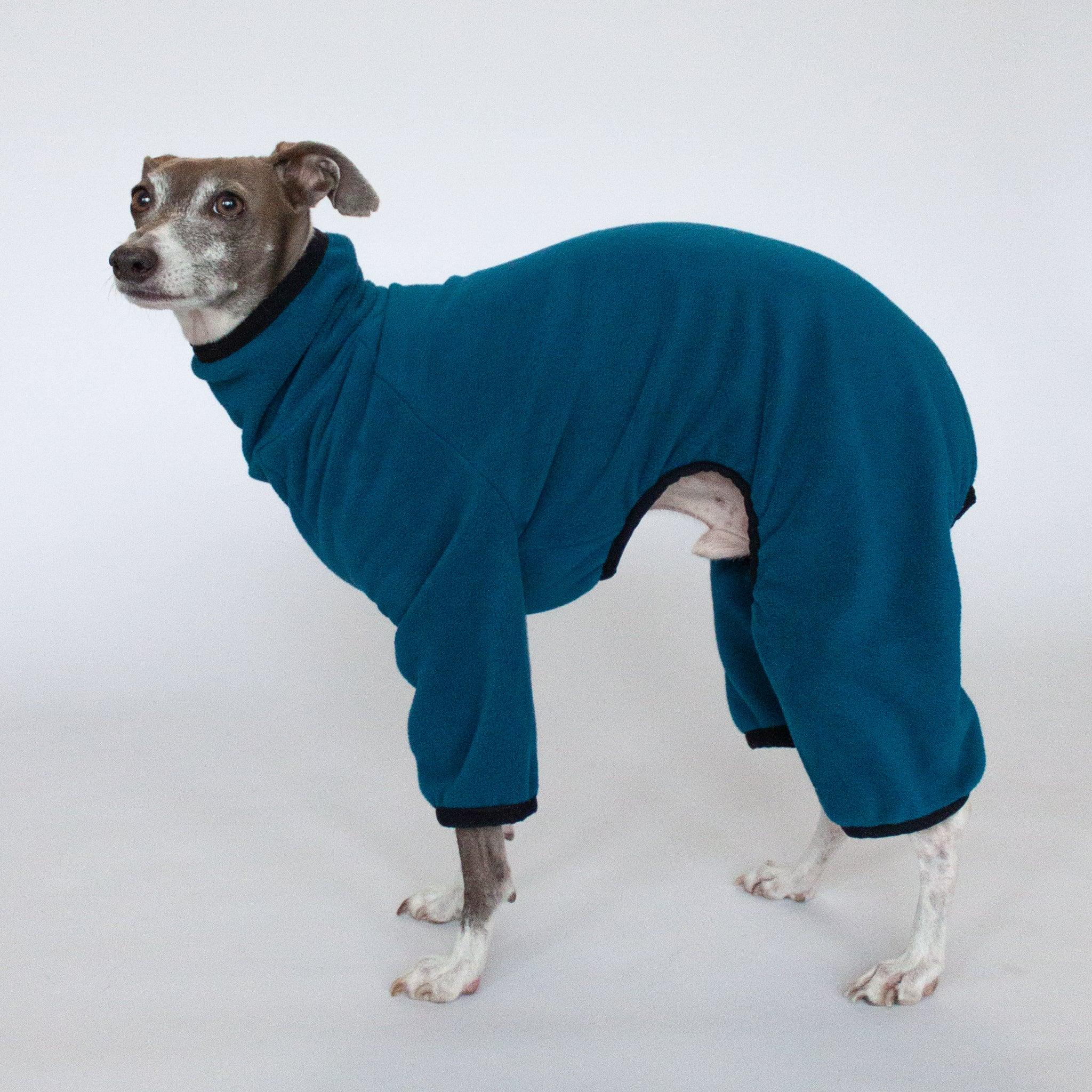 italian greyhound in fleece dog pajamas blue teal
