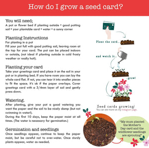 Welcome Little One Plantable Seed card - Greetings Cards - Altruis Living