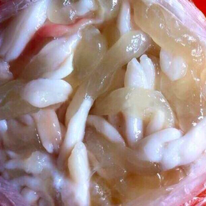 Squid Egg 500 g. | ไข่หมึกสด 500 ก. - Travel Recommends Shop