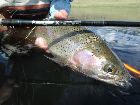 Sage X Fly Rod Rainbow Trout Fishing