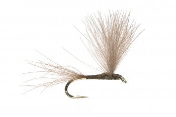 The Student Olive Dry Fly Pattern