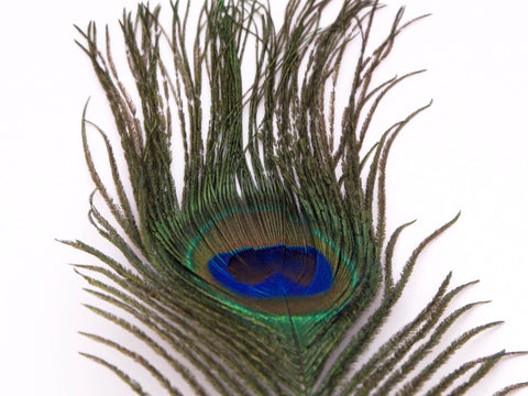 Nature's Spirit Peacock Eye Sticks Natural