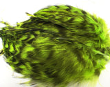 Wapsi Barred Neck Hackle Strung Fl Chartreuse