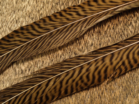 golden pheasant tail feathers fly tying
