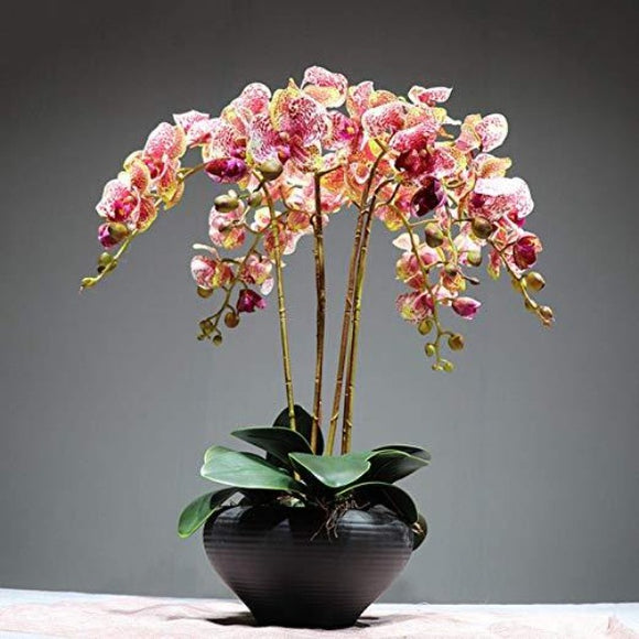 Artificial Butterfly Orchid Flowers ¦ Silk Butterfly Orchid Flowers A Wine Lovers