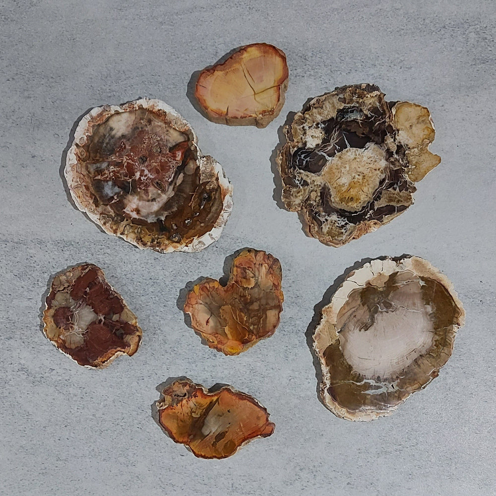 Crystals - Rough - Petrified Wood Slabs