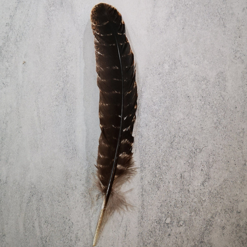 Smudging accessory - Wild turkey feather