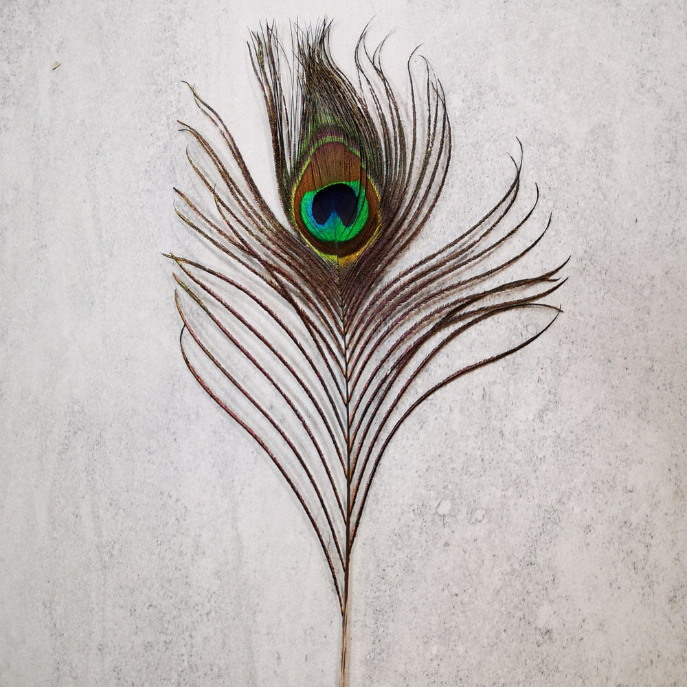 Smudging accessory - Peacock feather