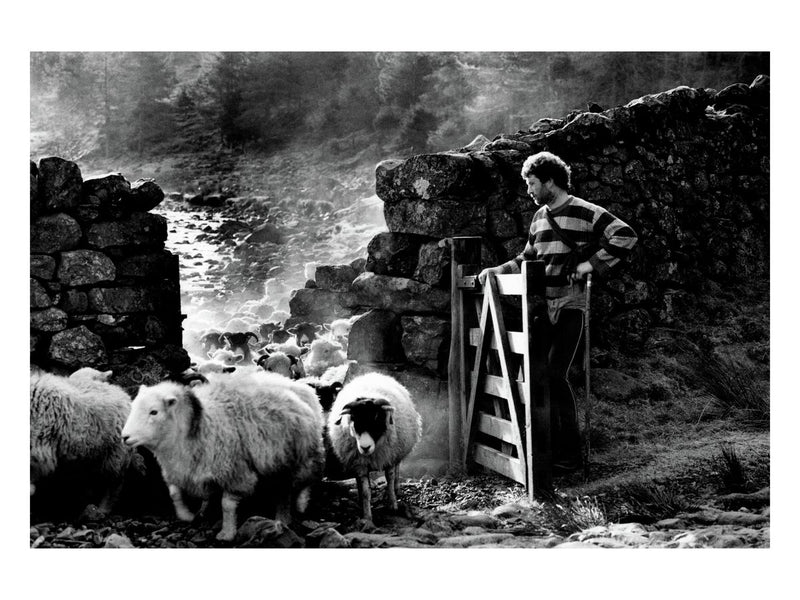 Cumbrian Shepherd, 1990