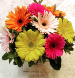 Colourful Gerbera Box