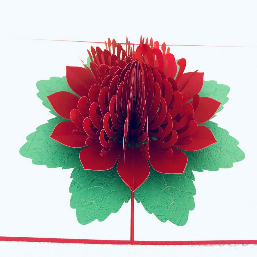 Handmade Australian Native Flower Red Waratah Pop Up Greeting Card - Online Party Supplies