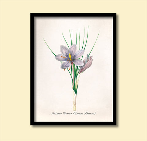 Autumn Crocus Flowers Print, Botanical Print, Vintage Plant Art, Botanical Wall Art, F1033