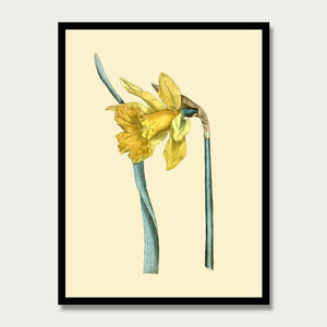 Yellow Daffodil Print, Botanical Wall Art, Nursery Decor, Vintage Plant Art, F1021