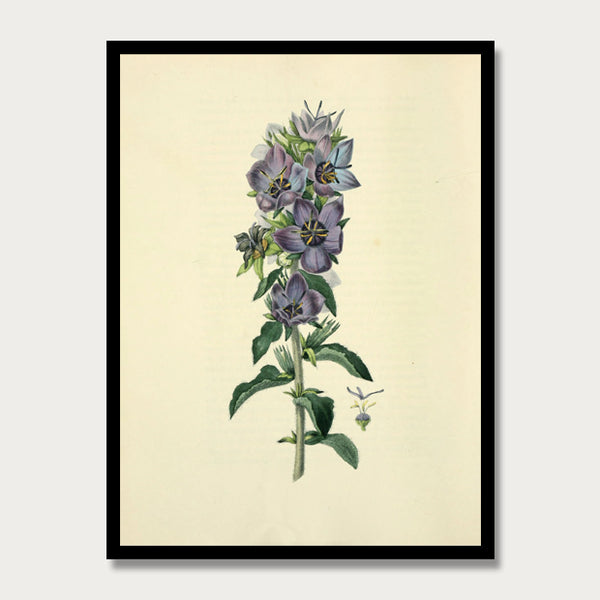 Blue Bell Flower Print, Botanical Print, Vintage Plant Art, Botanical Wall Art, F1017