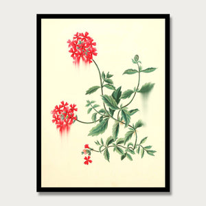 Red Verbena Print, Botanical Print, Vintage Plant Art, Botanical Wall Art, F1014