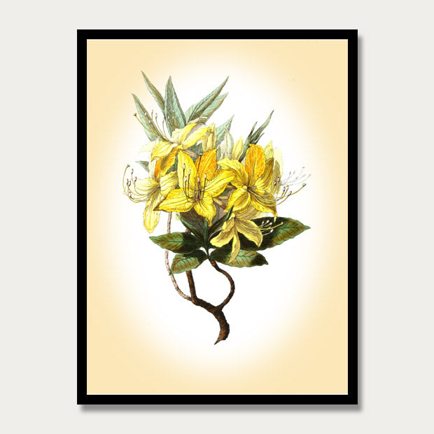 Yellow Azalea Print, Botanical Print, Vintage Plant Art, Botanical Wall Art, F1010