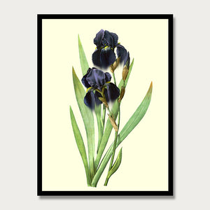 Purple Iris Print, Botanical Print, Vintage Plant Art, Botanical Wall Art, F1018