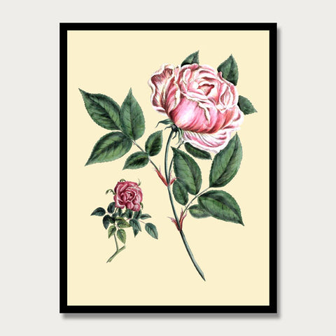 Pink Rose Print, Botanical Print, Vintage Plant Art, Botanical Wall Art, F1022