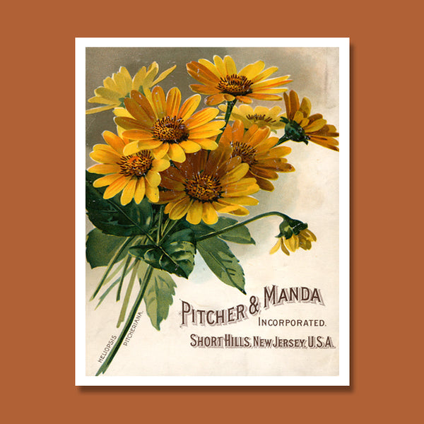 Pitcher & Manda Seed Catalogue Print, Botanical Catalogue, Botanical Art Print, Catalogue Cover Illustration, F1007