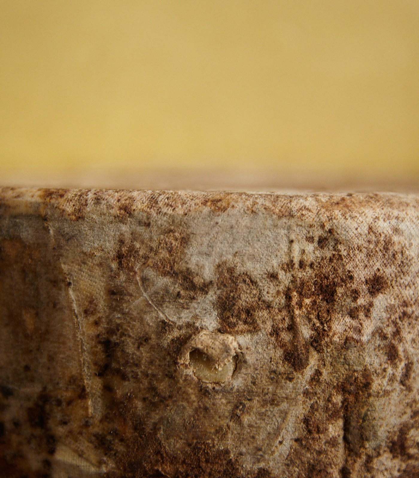 Close up of a cut Westcombe Cheddar cheese showing the cloth binding and golden-coloured paste