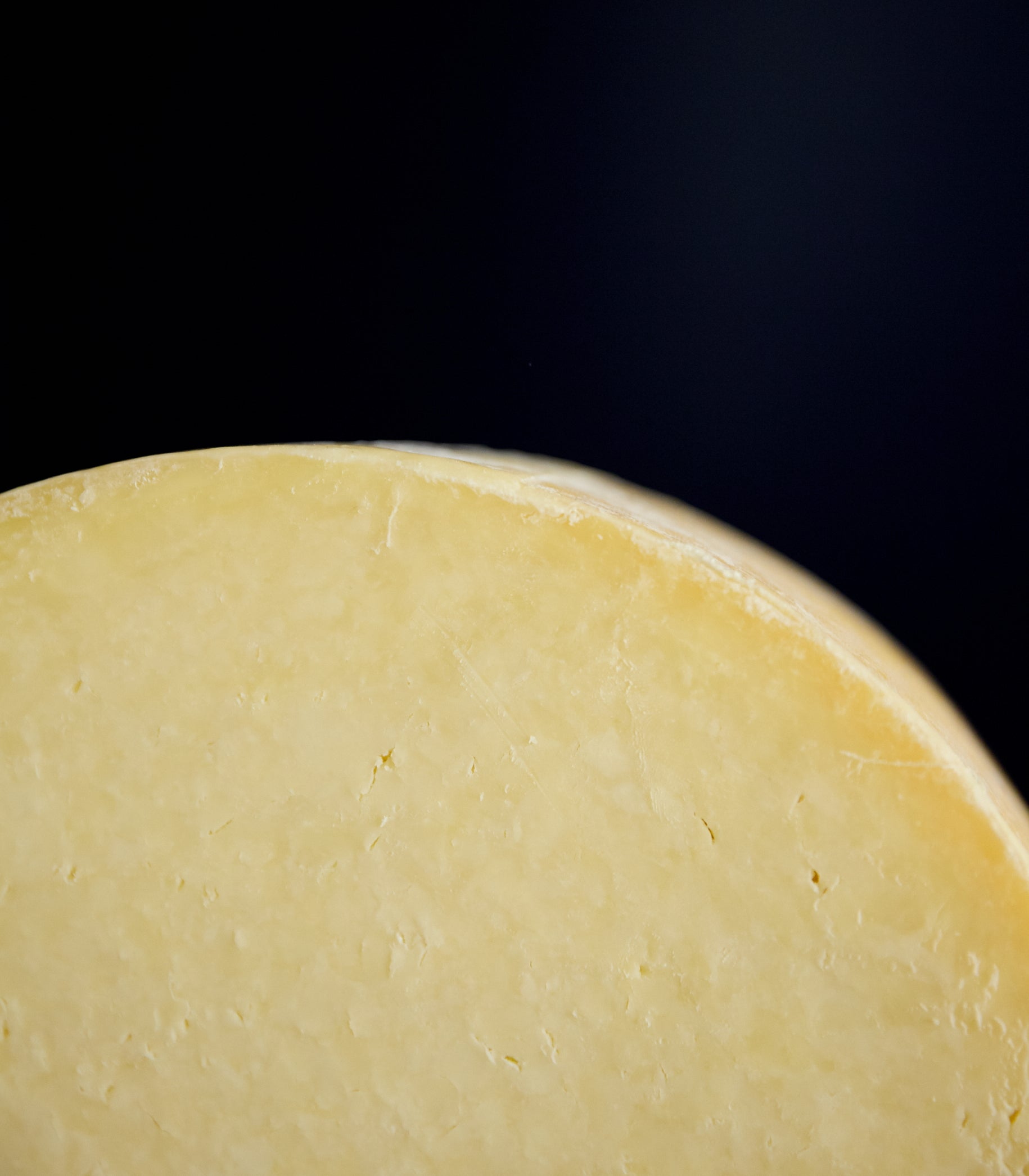 Close up of a cut cross-section of a whole Kirkham's Lancashire cheese showing the crumbly textured paste